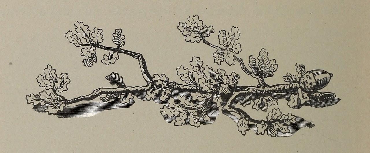 Fig. 3. Gribouille trasformato in un ramo, illustrazione da Maurice Sand, L'histoire du veritable Gribouille, Paris, Blanchard-Hetzel, 1850, p. 70