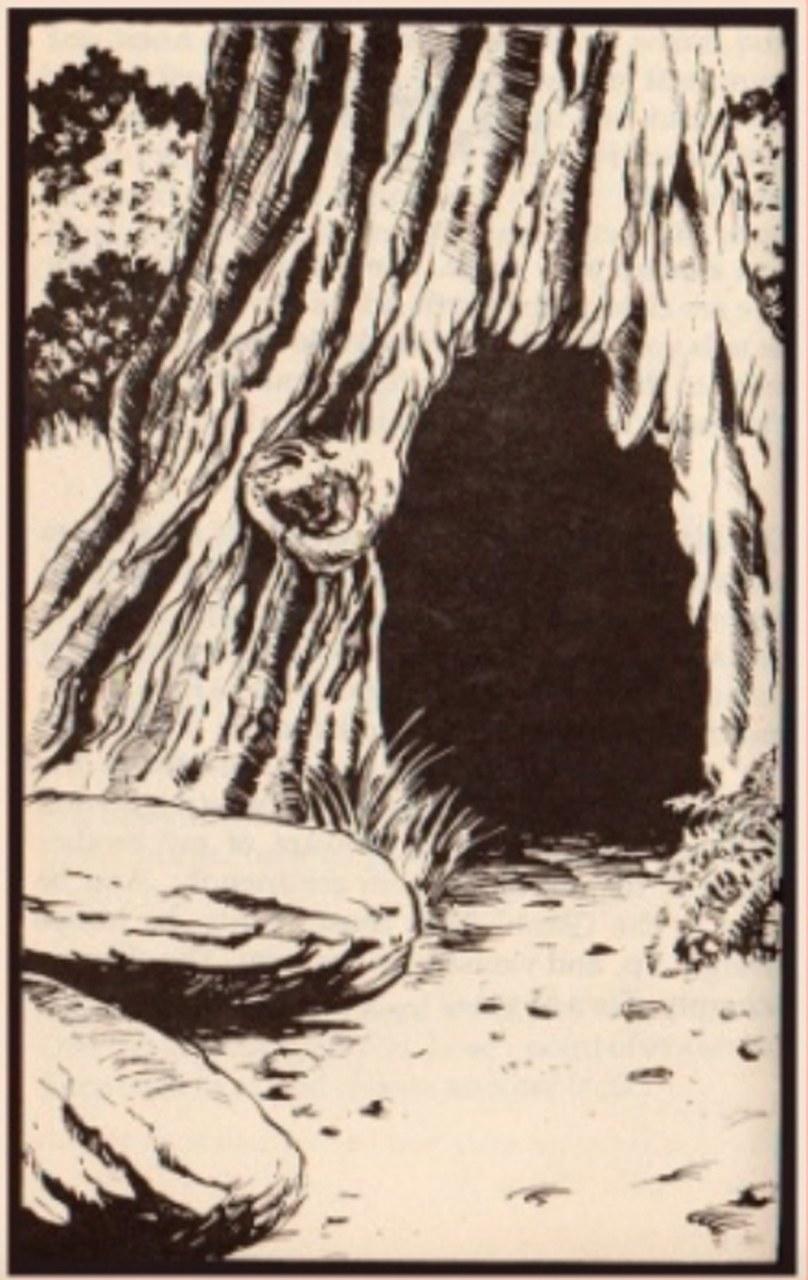 Fig. 2 Il castagno incantato del bosco di Maragraça. Illustrazione alla versione O colhereiro da Benfeita, <http://www.benfeita.net/colhereiro.htm>.